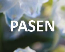 Button_Pasen